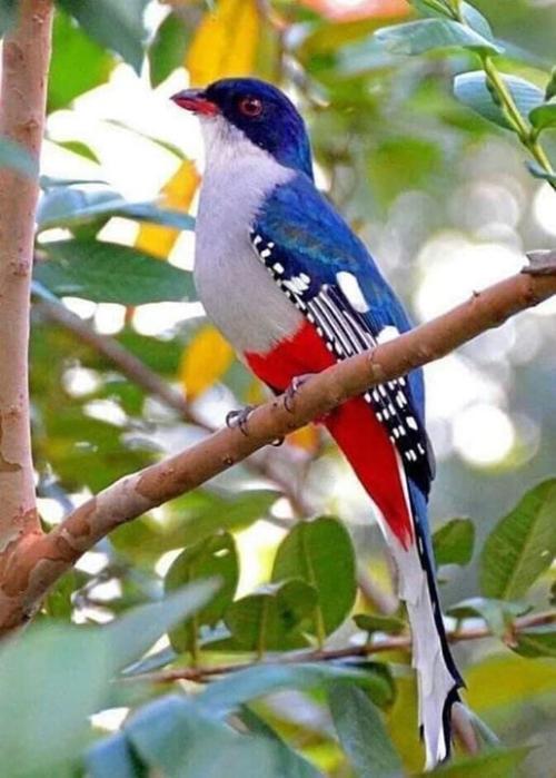FlagBird